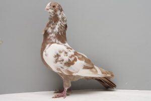 Figurita de Sevilla- palomas