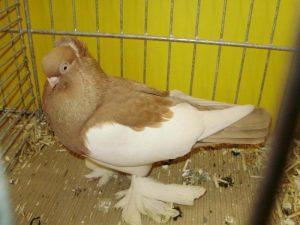 Magpie Tumbler