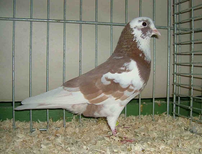 www .birds com