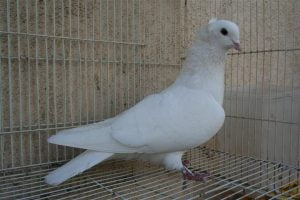 tumbler - white