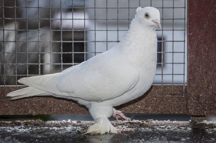 white tumbler