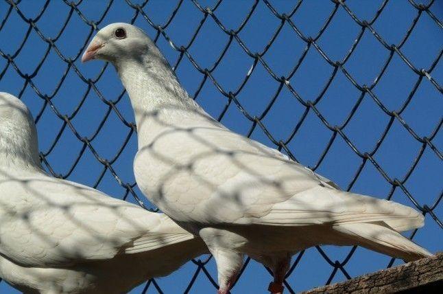 white - tumbler - bulgarian tumbler
